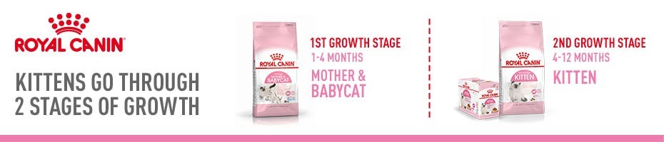 Health is fragile - Give your kitten the perfect start in life with Royal Canin