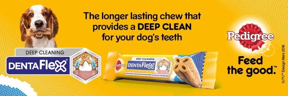 Dentaflex Banner