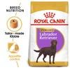 Royal Canin Labrador Retriever Sterilised Adult Dry Dog Food 12kg
