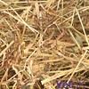 PetUK Premium Meadow Hay 2.25kg