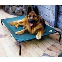 Coolaroo Raised Dog Bed (Small) big image