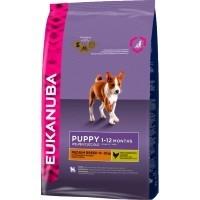 Eukanuba Puppy Junior Medium Breed big image