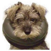 Comfy Collar an Alternative to Elizabethan Collar big image