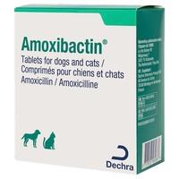 Amoxibactin 250mg Tablets for Dogs big image