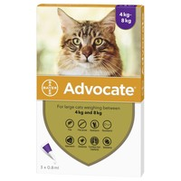 Advocate for Large Cats big image