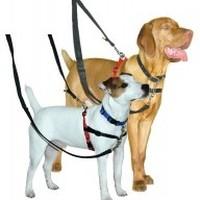 Halti Training Dog Harness big image